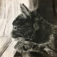 A Cat's Contemplation