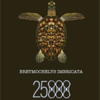 Endangered Hawksbill Sea Turtle